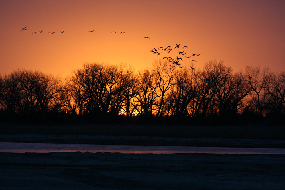 Cranes-in-the-sunset